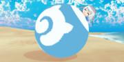 海岸で遊ぶバンドウイルカちゃん