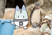 フンボルトペンギン ダネ