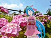 ミクさんと紫陽花②