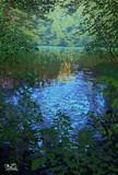 五色沼自然探勝路 綺麗な小川と沼