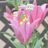 花の中の美鈴たち