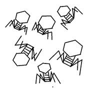 俺が一目惚れした生き物「バクテリオファージ」
