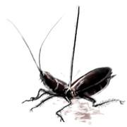 秘技 ゴキブリ殺し