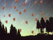 綺麗な流星群