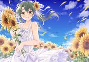 瑞鶴と向日葵と青空