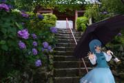 小傘と紫陽花