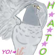 H★A★T★O 鳩!
