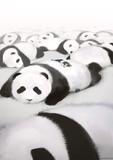 私パンダだから