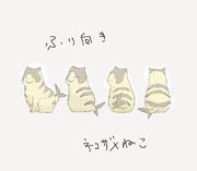 振り向きネコザメ猫
