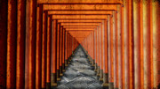 鳥居のトンネル