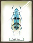 ルリボシカミキリの標本