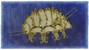 カビブタmold pigs(Sialomorpha dominicana)