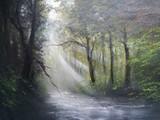 秋色の木漏れ日