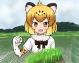 お米食べろ!