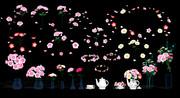 バラ咲き方色々 配布