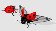 紅紐式テントウムシ