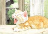 あくびしてる子猫
