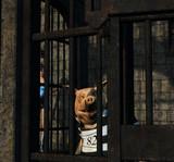 鍵が外れてる牢屋