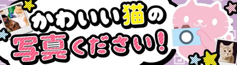 かわいい猫の写真を大募集★猫コンテスト2016開催!
