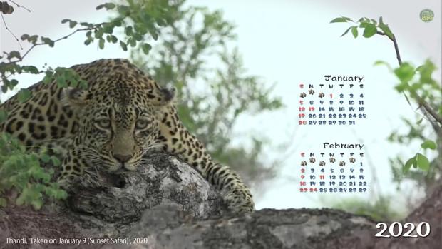 【がおーっ】猫カレンダー1月・2月その2