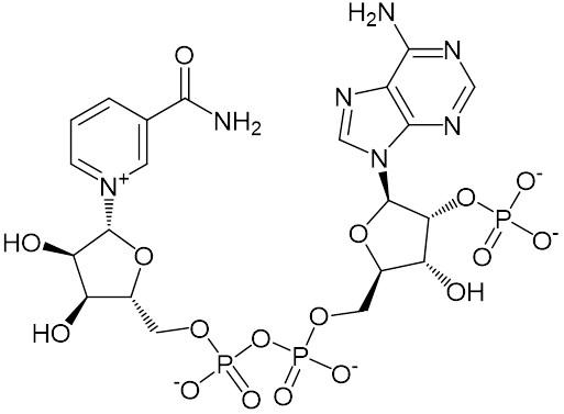 NADP⁺ / ことり さんのイラスト - ニコニコ静画 (イラスト)