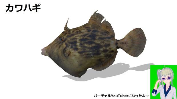 カワハギ【MMDアクセサリ配布】&Vtuberデビュー
