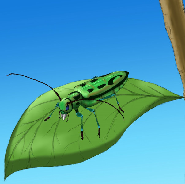 【虫スケッチ】ハンノアオカミキリ(カミキリムシ)