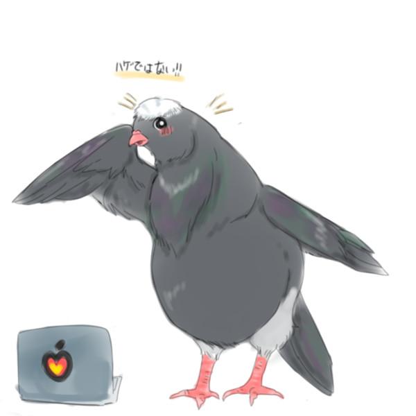 植毛してもらった不明鳩