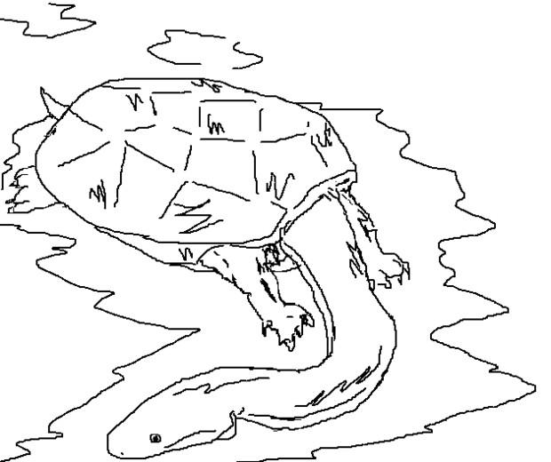 合成生物 (カメ&うなぎ)