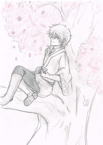 銀時と桜。