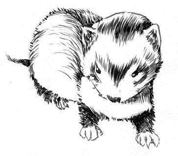 動物シリーズ いたち カーター さんのイラスト ニコニコ静画イラスト