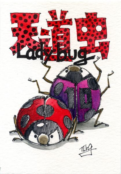 天道虫 Lady bug