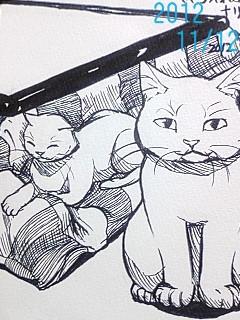 猫とこたつ。