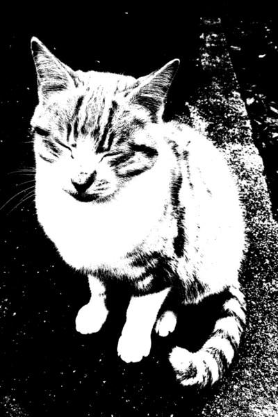 猫 白黒 K ケイ 君 さんのイラスト ニコニコ静画 イラスト