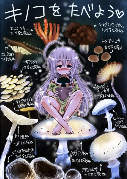 きの子とキノコを食べよう