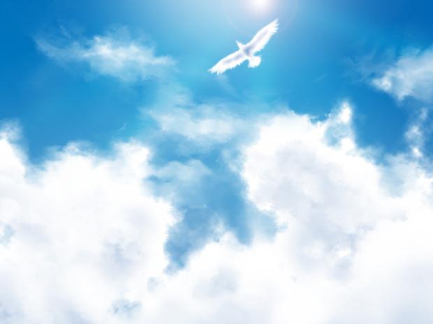 青空と雲と鳥