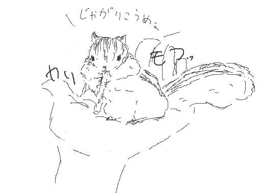 アシハラリスの生態6