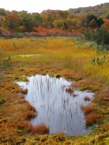 大沼の紅葉 水溜り