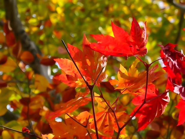 大沼の紅葉 「多色混合」