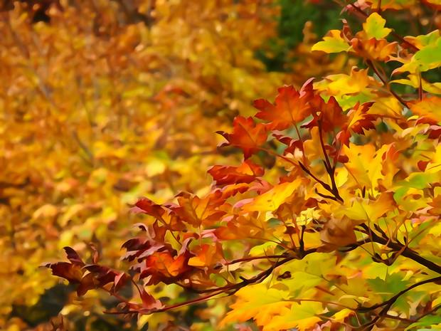 大沼の紅葉 「永遠の紅葉」