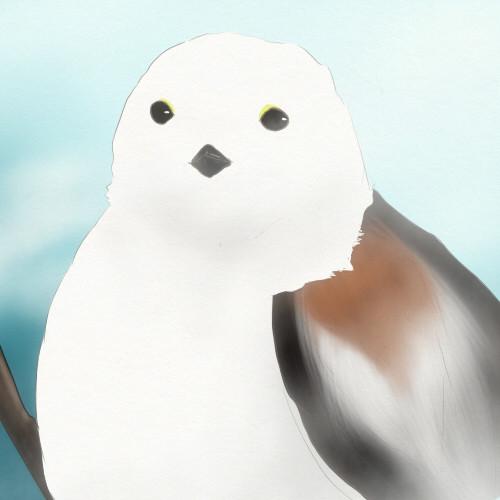 殺人毛玉(鳥類)