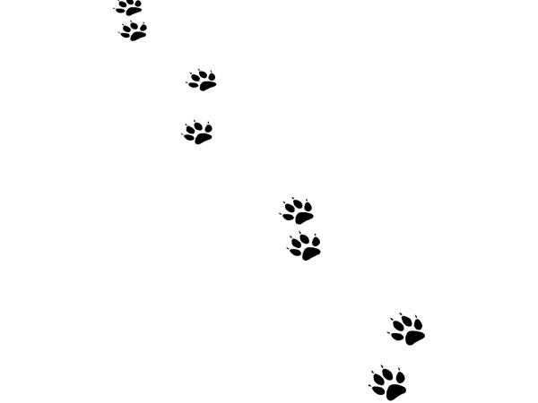 猫の足跡_ver1.1