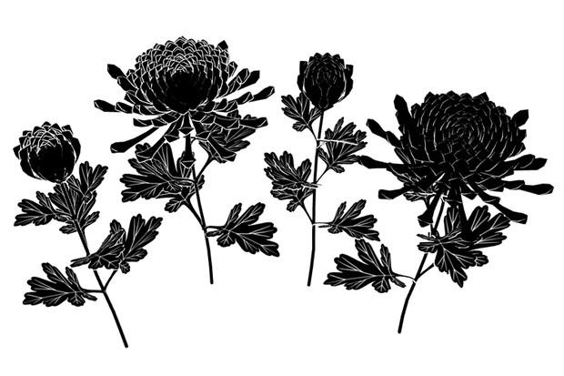 菊の花と蕾ver1.2