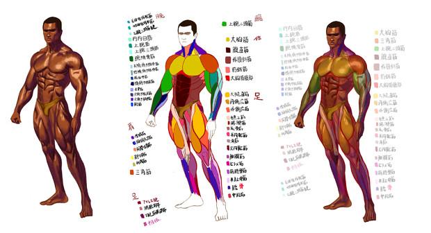 筋肉解剖図 たか さんのイラスト ニコニコ静画 イラスト