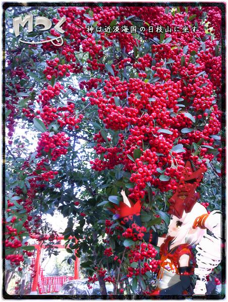【Mてく】赤い実(日枝神社)