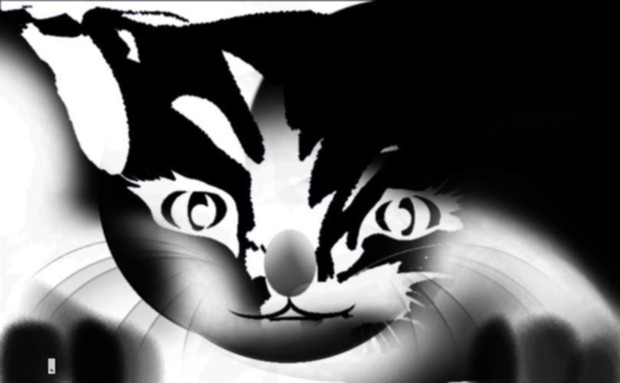 猫 338