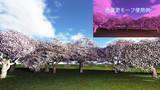【MMDステージ配布】桜  L3【スカイドーム】