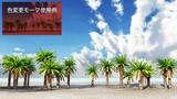 【MMDステージ配布】椰子の海岸 L6【スカイドーム】