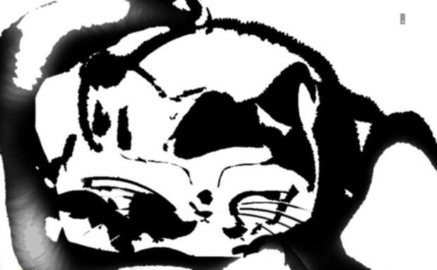猫 354