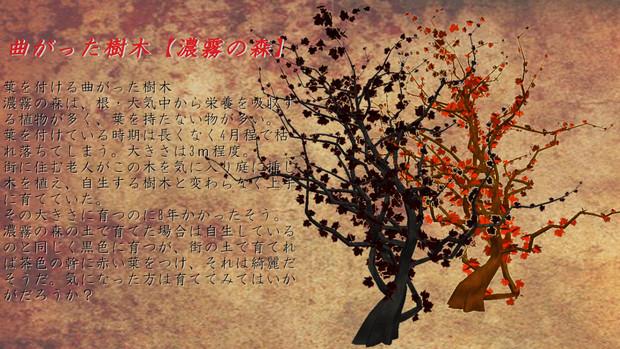 【配布】曲がった樹木【濃霧の森】